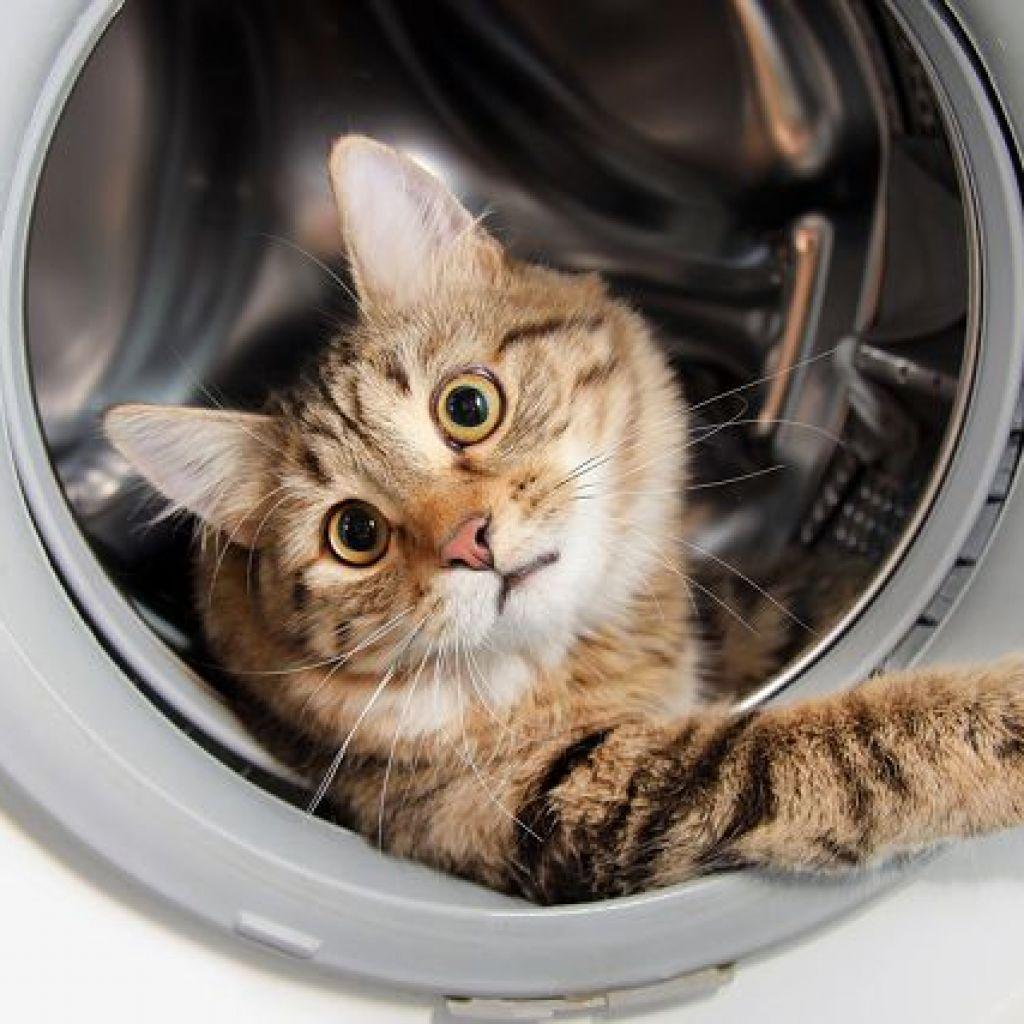 Удаляем стиркой кошачью мочу – известные способы