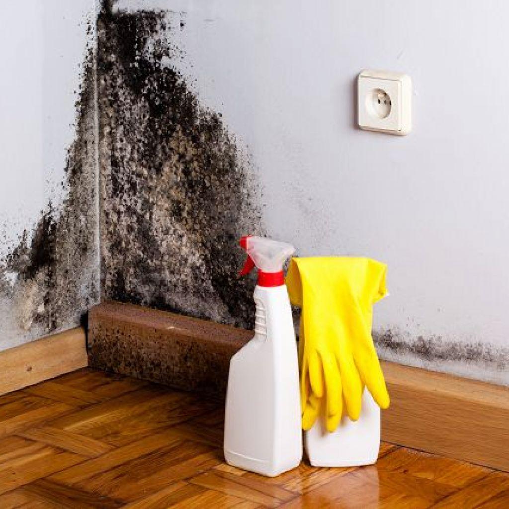 Как убрать чёрную плесень на стенах – все способы!