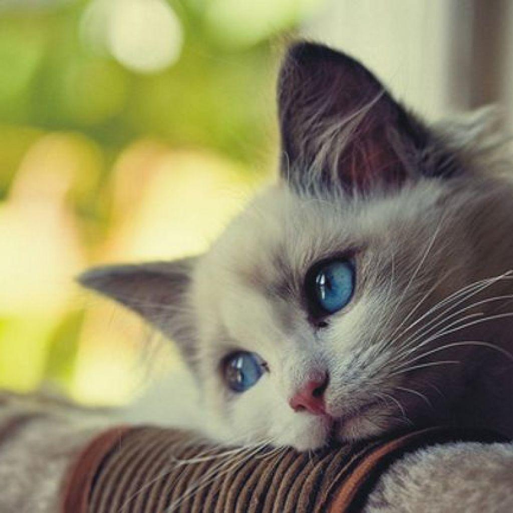 Пошаговая борьба с запахом кошачьей мочи – наверняка!