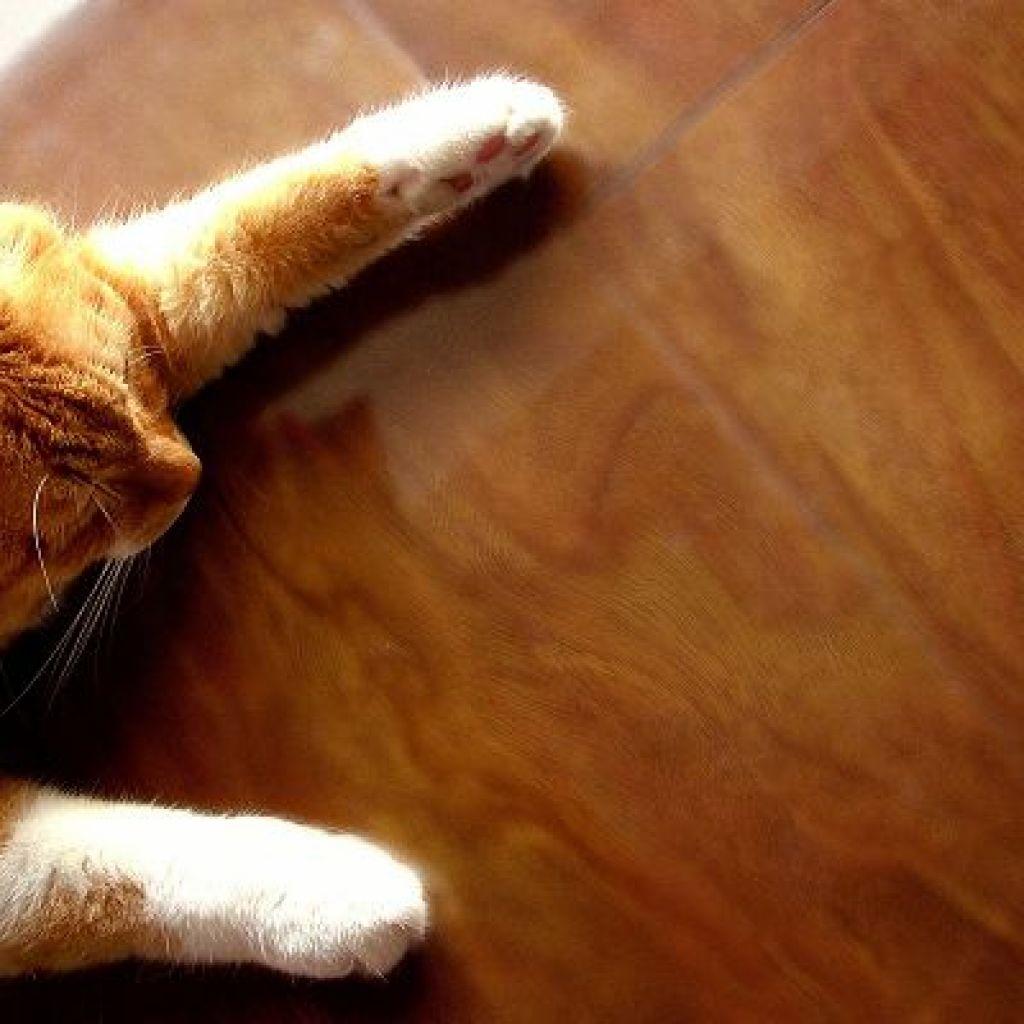 Народные средства уборки кошачьей мочи с пола