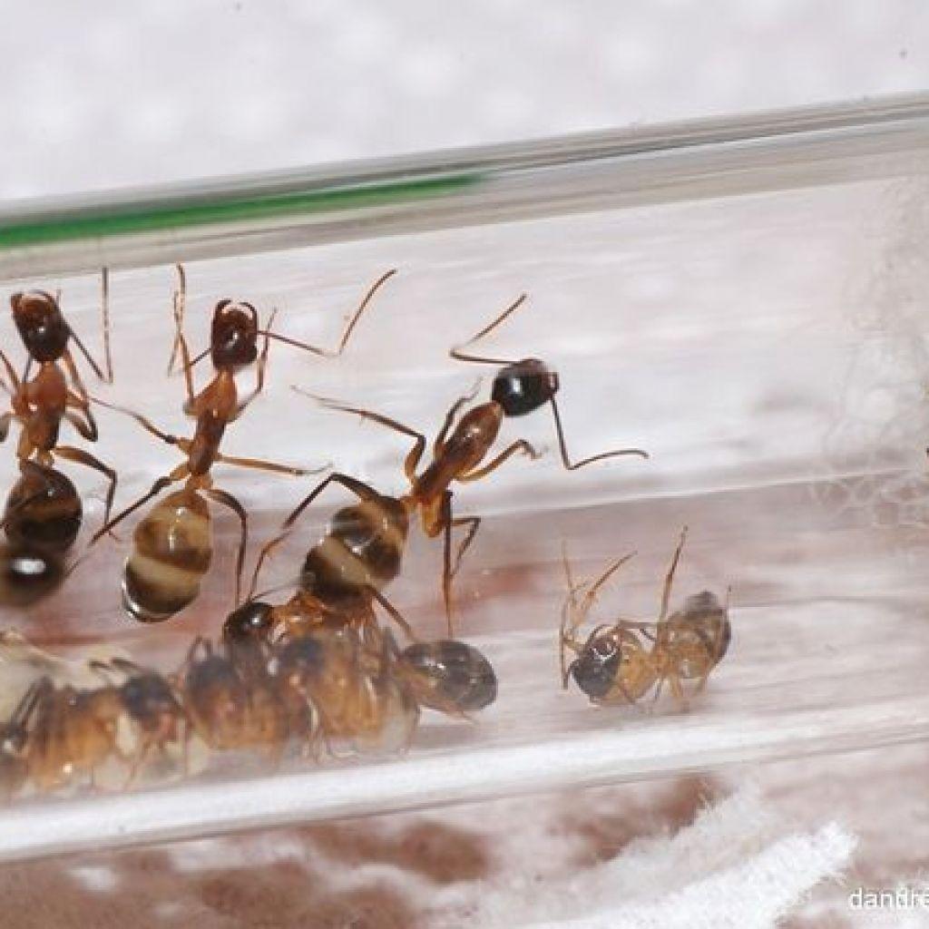 Народные средства от муравьев в квартире