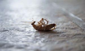 Лучшие средства избавления от тараканов