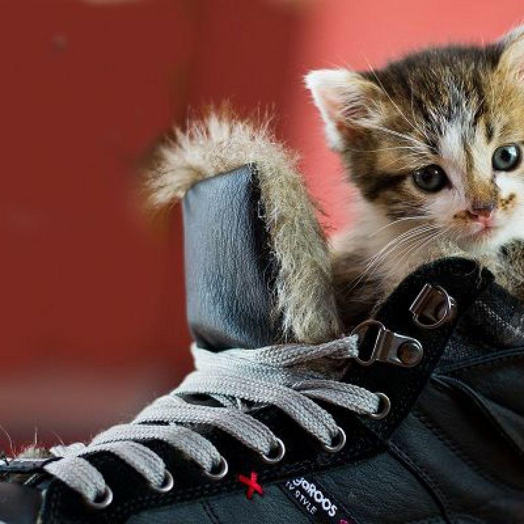 Выводим запах кошки из обуви – 5 популярных способов