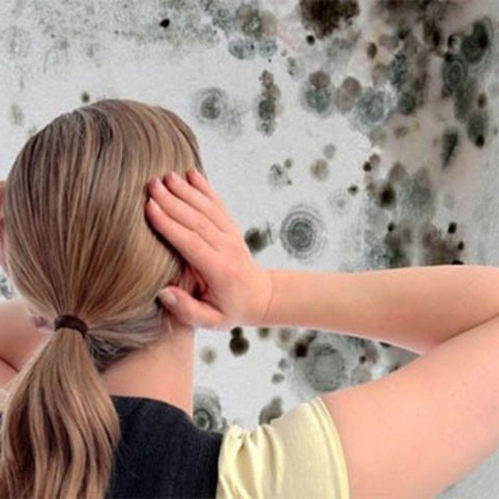 Убрать плесень и грибок со стен – пошагово