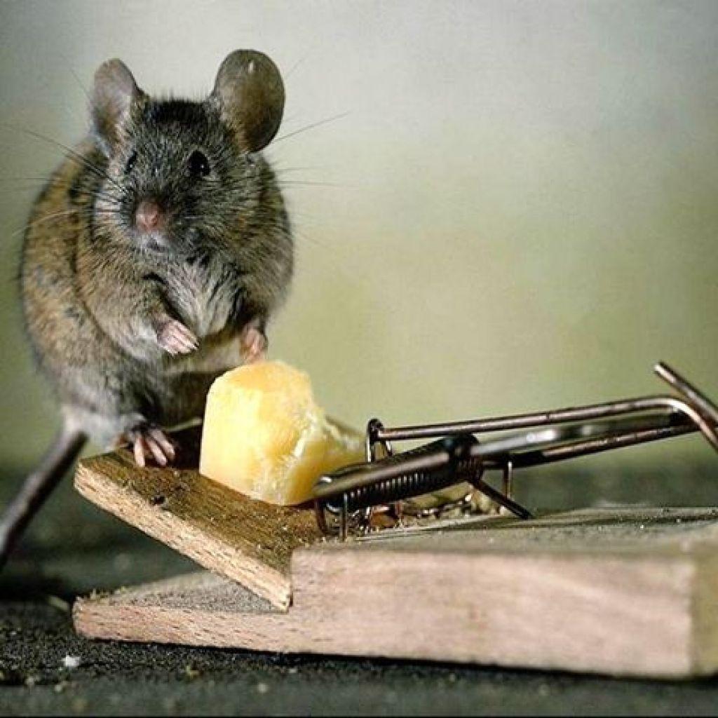 Все популярные средства от мышей
