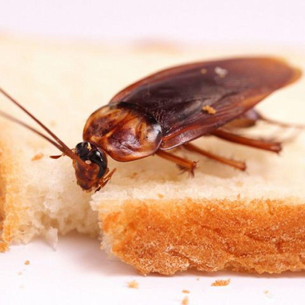 Обзор средств от тараканов – выбрать лучшее!