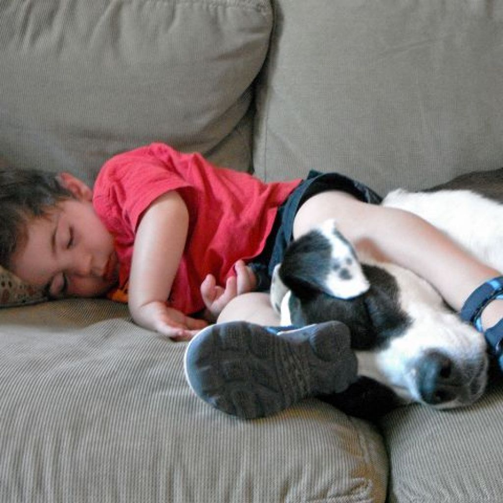 Убрать запах мочи на диване – водкой!