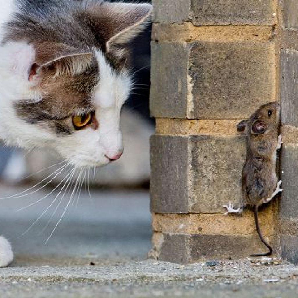 Какое средство от мышей в частном доме самое эффективное