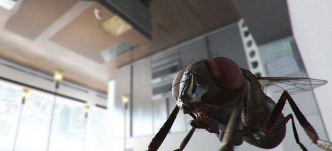 Избавляемся от мух в доме – бюджетные способы
