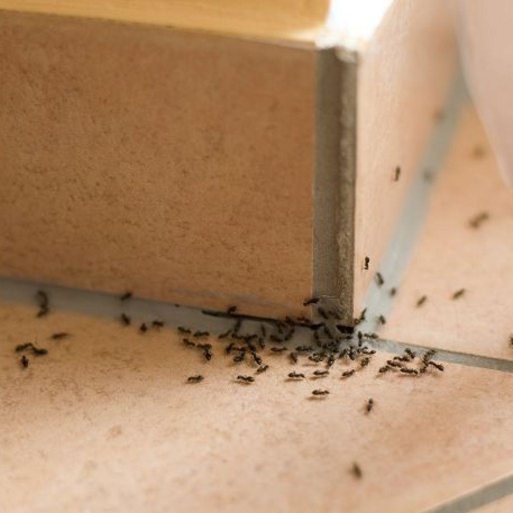 Уничтожение муравьёв – народные советы