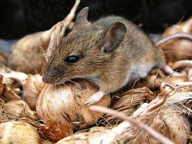 Мышь порти запасы