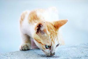 Чем отстирать кошачью мочу