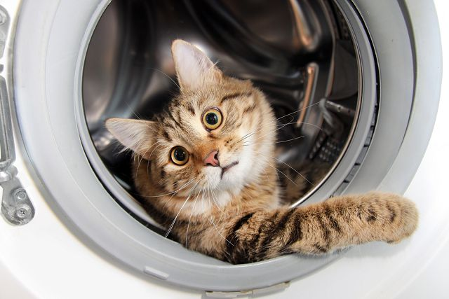 Чем отстирать кошачью мочу эффективные способы