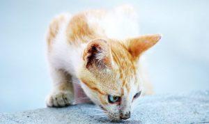 Средство от запаха кошачьей мочи