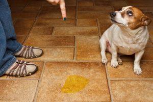 Как убрать запах собачьей мочи